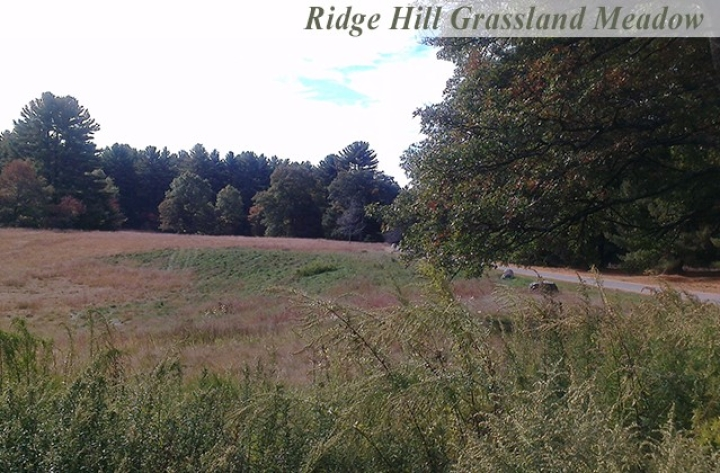 Ridge-Hill-Grassland-Meadow